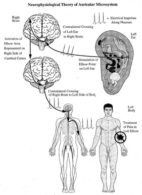 Auriculotherapy-Manual